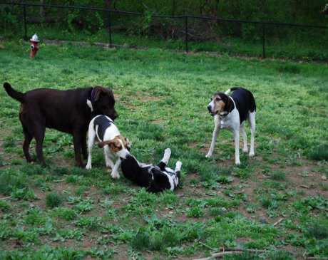 The 10 Best Dog Parks in Connecticut!