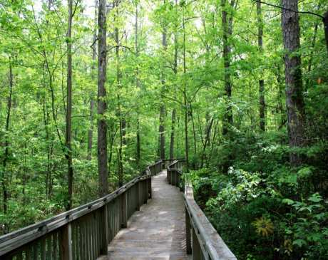 The 14 Best Hiking Trails in Alabama!