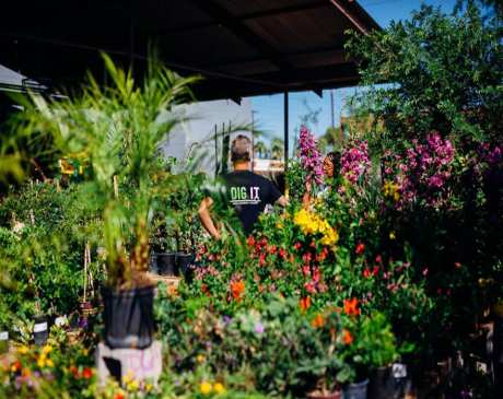 The 10 Best Garden Centers and Nurseries in Arizona!