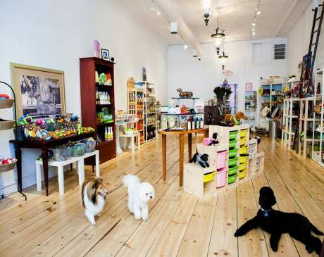 10 Best Pet Boutiques in Ohio