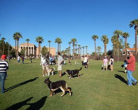 The 10 Best Dog Parks in Arizona!