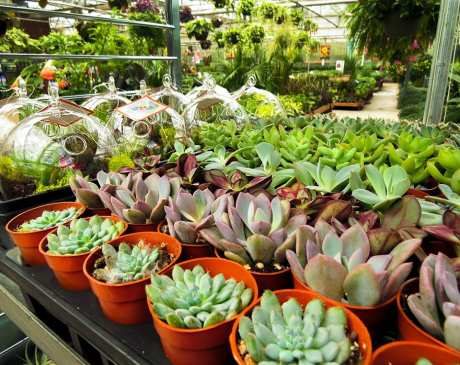 The 11 Best Garden Centers and Nurseries in Connecticut!