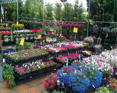 The 10 Best Garden Centers and Nurseries in Pennsylvania!