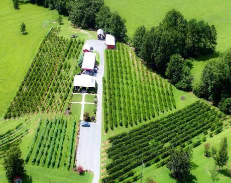 The 10 Best Wineries in Alabama!