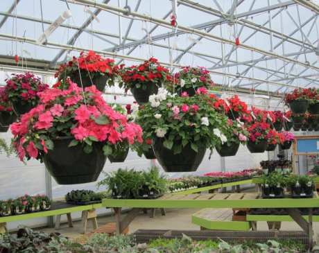 The 10 Best Garden Centers and Nurseries in Illinois!