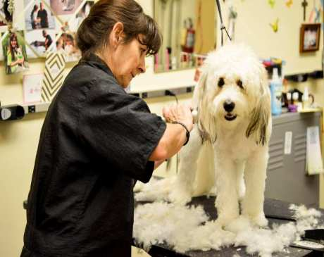 The 10 Best Pet Stores in Minnesota!