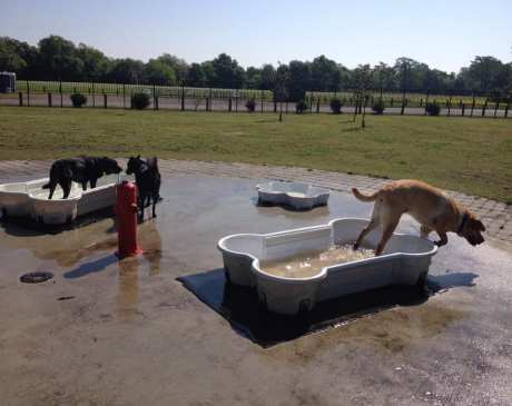 The 10 Best Dog Parks in Louisiana!