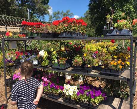 The 10 Best Garden Centers and Nurseries in Missouri!