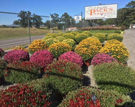 The 7 Best Garden Centers and Nurseries in Alabama!