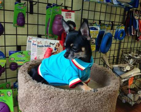 The 10 Best Pet Boutiques in Massachusetts!