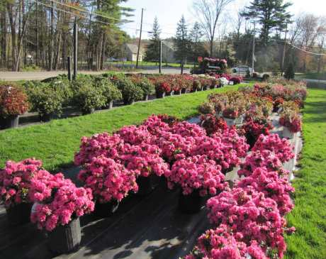 The 10 Best Garden Centers and Nurseries in New Hampshire!