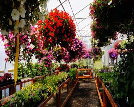 The 10 Best Garden Centers and Nurseries in Washington!