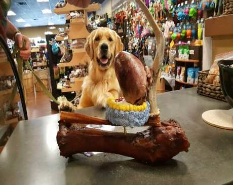 The 10 Best Pet Stores in Pennsylvania!