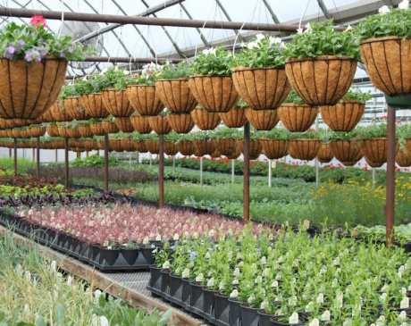The 10 Best Nurseries and Garden Centers in South Carolina!