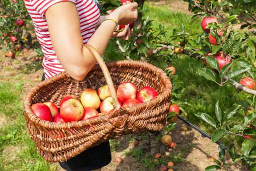 The 10 Best Apple Orchards in California!