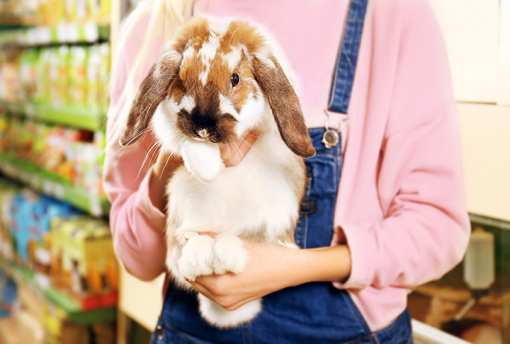 The 10 Best Pet Stores in California!