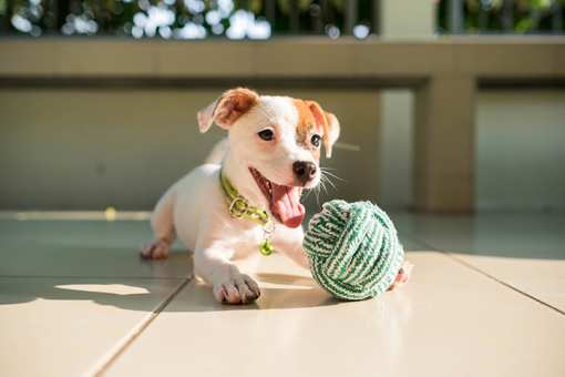 The 10 Best Pet Stores in Colorado!
