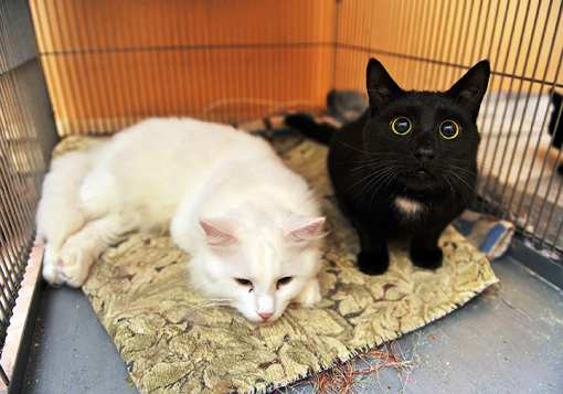 The 10 Best Animal Shelters in Connecticut!
