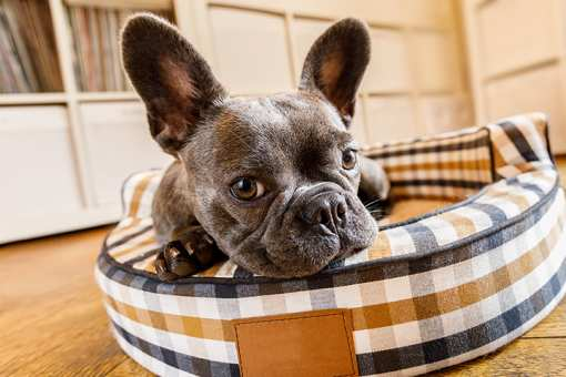 The 10 Best Pet Stores in Connecticut!
