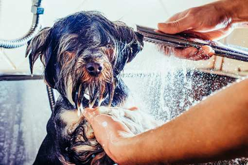 The 10 Best Pet Groomers in Florida!