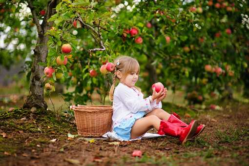 The 5 Best Apple Orchards in Idaho!