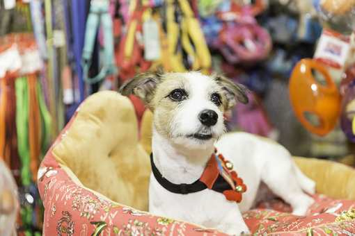 The 10 Best Pet Stores in Idaho!
