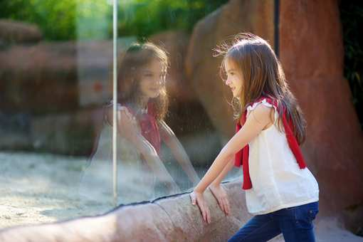 The 10 Best Educational Activities for Children in Illinois!