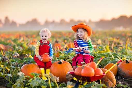 The 10 Best Pumpkin Patches in Illinois!