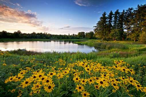 The 14 Most Romantic Places in Illinois!
