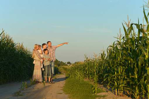 The 9 Best Corn Mazes in Indiana!