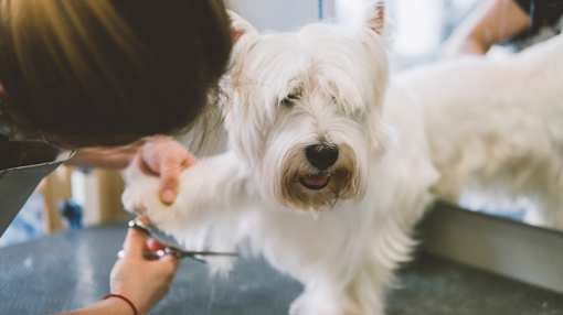 The 10 Best Pet Groomers in Indiana!