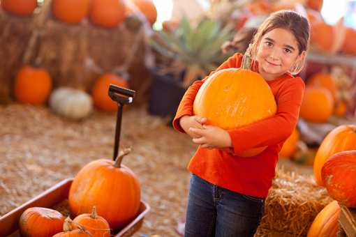 The 10 Best Pumpkin Picking Spots in Indiana!