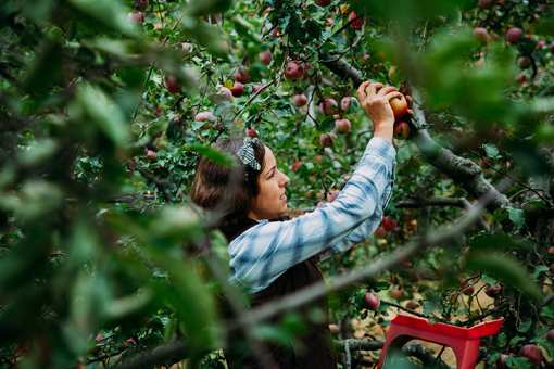 The 10 Best Apple Orchards in Kentucky!