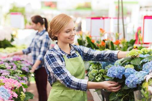 The 10 Best Garden Centers and Nurseries in Maryland!