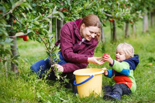 The 10 Best Apple Picking Spots in Maine!
