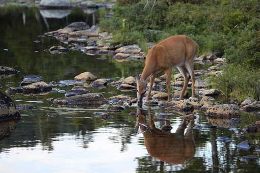 The 10 Best State Parks in Maine!