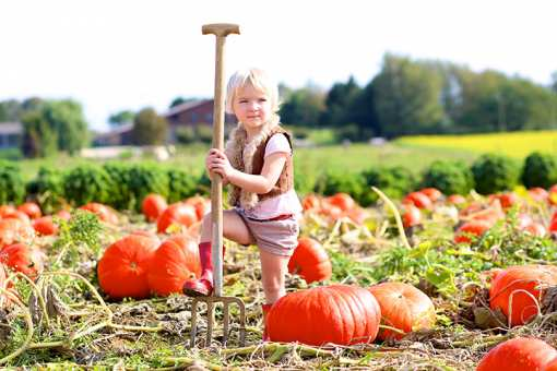 The 10 Best Pumpkin Patches in Minnesota!