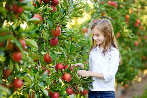 The 4 Best Apple Orchards in Montana!