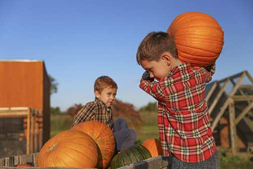 The 7 Best Places for Pumpkin Picking in Montana!
