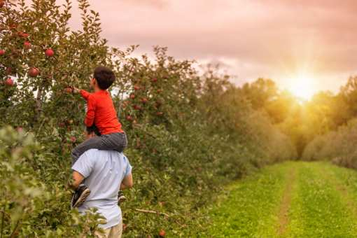 The 6 Best Apple Orchards in New Mexico!