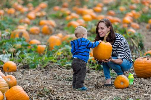The 8 Best Fall Festivals in New Mexico!