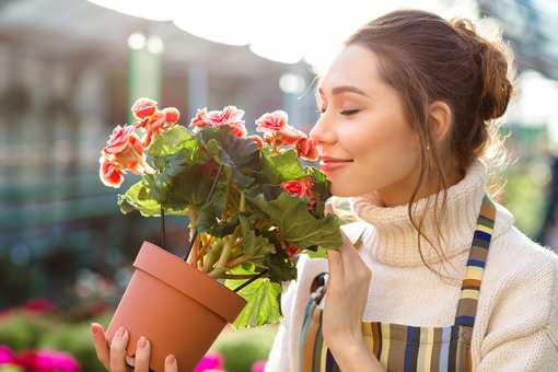 The 10 Best Garden Centers and Nurseries in New Mexico!