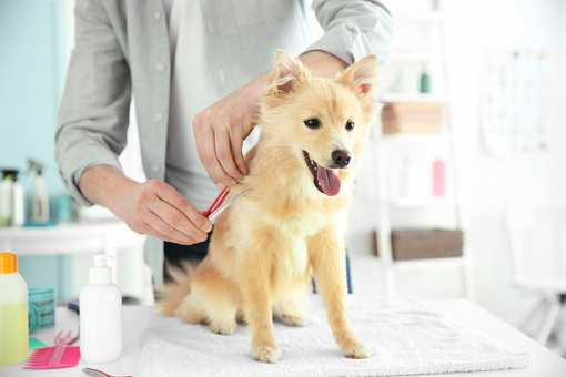 The 10 Best Pet Groomers in Nevada!