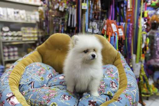 The 9 Best Pet Stores in New York!