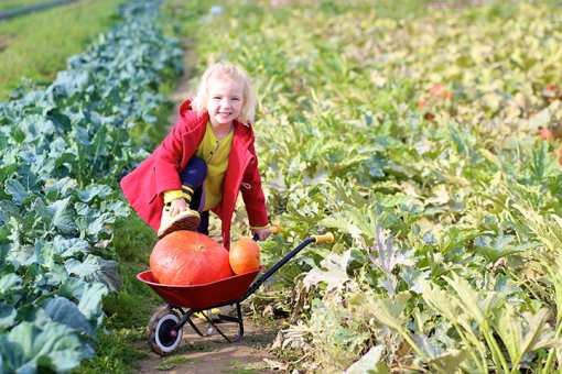 The 10 Best Pumpkin Patches in New York State!