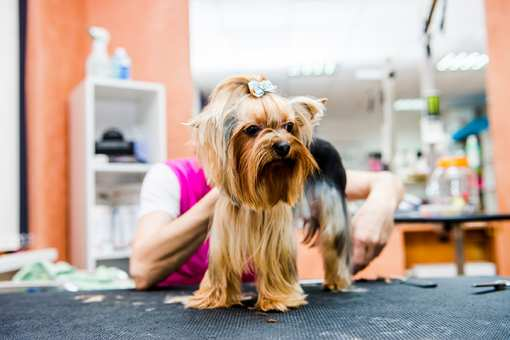 10 Best Pet Groomers in Tennessee