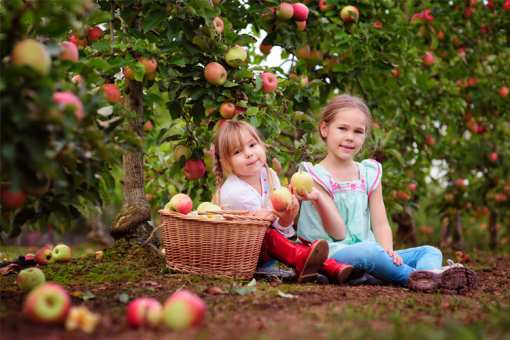 The 7 Best Apple Orchards in Texas!