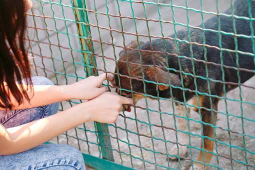 The 10 Best Animal Shelters in Virginia