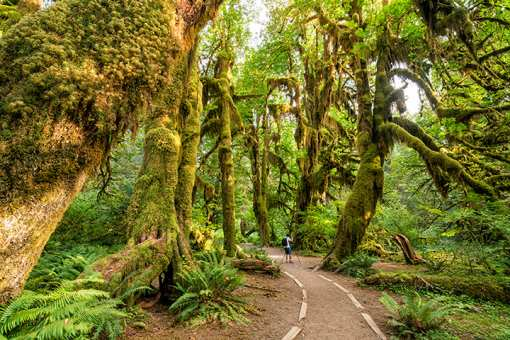 Editors' Picks: 20 of the Best Things to Do in the State of Washington!