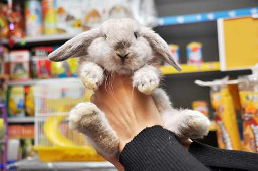 The 10 Best Pet Stores in Washington!